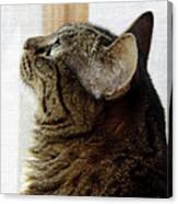 Look Out Window Tabby Cat Canvas Print