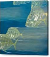 Lookdown Fish Selene Sp. In Motion Canvas Print