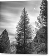 Looking For The Sky Into The Woods Canvas Print