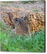Looking For Intruders Canvas Print
