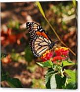Looking For Nectar Canvas Print
