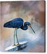 Looking For The Catch Of The Day Canvas Print