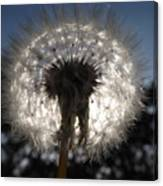 Looking Through A Dandelion Canvas Print