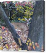 Looking Thru The Trees Canvas Print