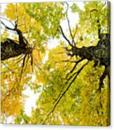 Looking Up At Fall Canvas Print