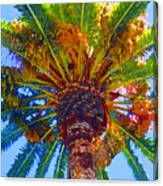 Looking Up At Palm Tree  Canvas Print