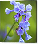 Looking Up At Virginia Bluebells  Canvas Print
