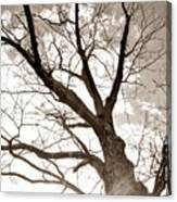 Looking Up In Sepia Canvas Print