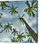 Looking Up The Hawaiian Palm Tree Hawaii Collection Art Canvas Print