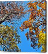 Looking Upward At Autumn's Trees  Canvas Print