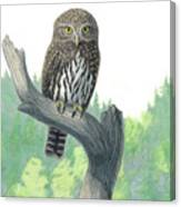 Lookout- Northern Pygmy-owl Canvas Print