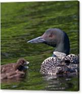 Loon Afternoon Canvas Print