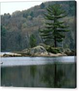 Loon At Black Lake Canvas Print