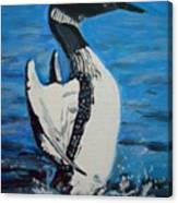 Loon Dance Canvas Print