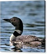 Loon In Blue Waters Canvas Print