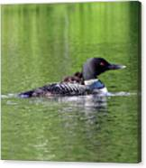 Loon With Chick On Back Canvas Print