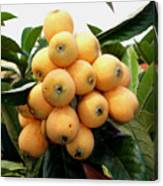 Loquat Exotic Tropical Fruit 4 Canvas Print