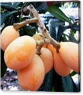 Loquat Exotic Tropical Fruit  Canvas Print