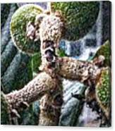 Loquat Man Photo Canvas Print