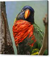 Lorikeet Canvas Print