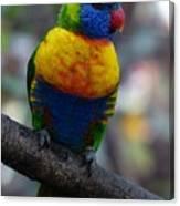 Lorikeet Parrot  Canvas Print