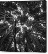 Lost Among The Bamboo Canvas Print