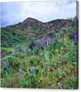 Lost Canyon Wildflowers Canvas Print