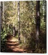 Lost Trail Canvas Print