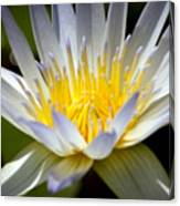 Lotus 10 Canvas Print