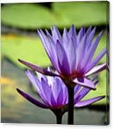 Lotus 5 Canvas Print