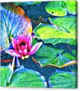 Lotus Blossom Canvas Print