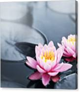 Lotus Blossoms Canvas Print