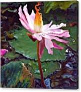 Lotus Fire Canvas Print