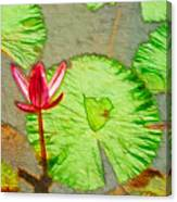Lotus Flower Bloom In Pink 1 Canvas Print