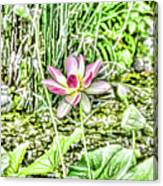 Lotus Flower Bloom In Pink 2 Canvas Print