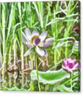 Lotus Flower On The Water Canvas Print