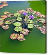 Lotus Flowers #4 Canvas Print