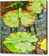 Lotus Flowers Leaves Canvas Print