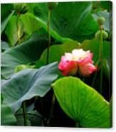 Lotus Forms Canvas Print