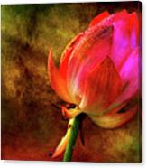 Lotus In Texture - A Present For A Friend Canvas Print