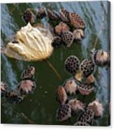 Lotus In The Lake Canvas Print