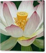 Lotus Of Awakening Canvas Print