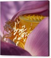 Lotus Seed Pod Canvas Print