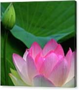 Lotus Siblings Canvas Print