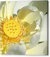 Lotus Up Close Canvas Print