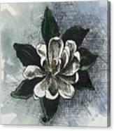 Louisiana Magnolia Canvas Print