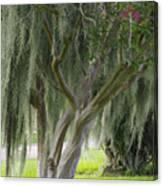 Louisiana Moodiness Canvas Print