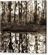 Louisiana Swamps 3 Canvas Print
