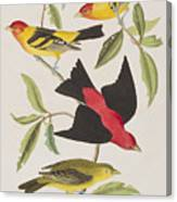 Louisiana Tanager Or Scarlet Tanager  Canvas Print