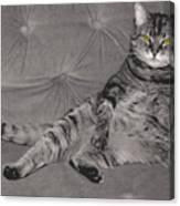 Lounge Cat Canvas Print